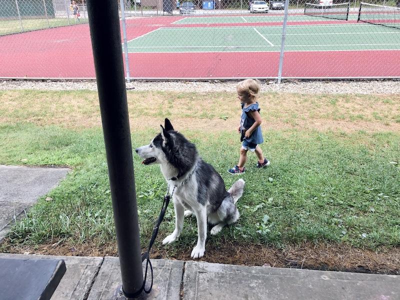 Toddler and Siberian Husky at park
