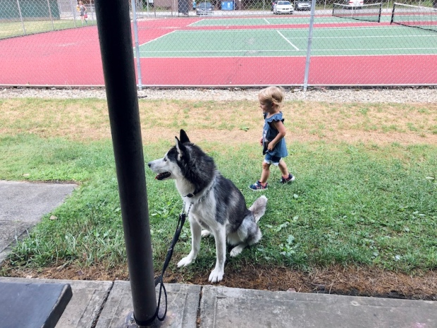 Toddler and Siberian Husky at park