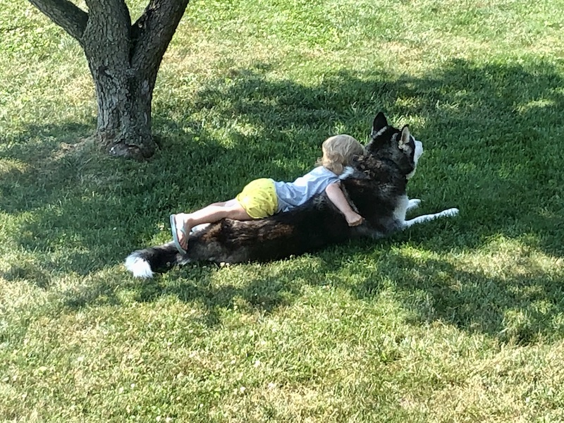 Toddler laying with Siberian Husky in grass