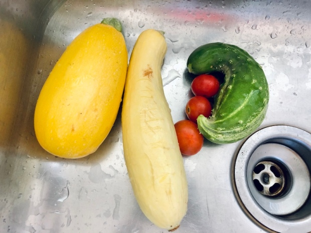 Squash, cucumber, and tomatoes from vegetable garden