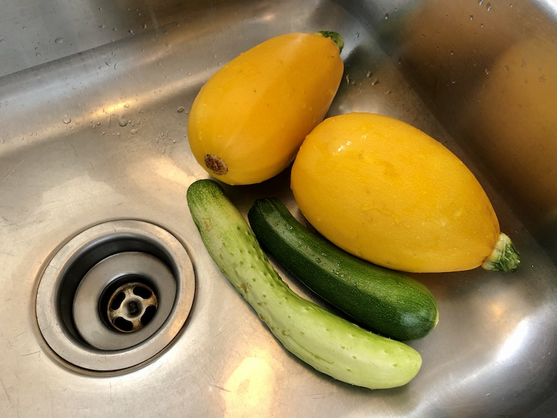Yellow squash, zucchini, and cucumber from vegetable garden