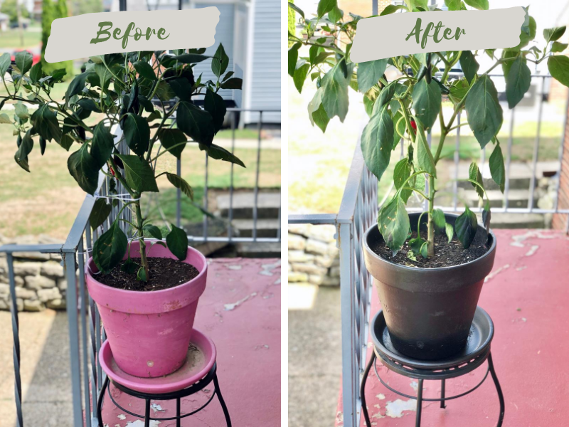 Planter DIY with spray paint