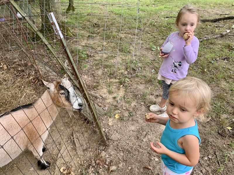 Kids petting goats