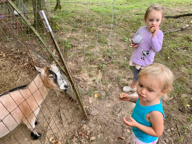 Kids petting goats