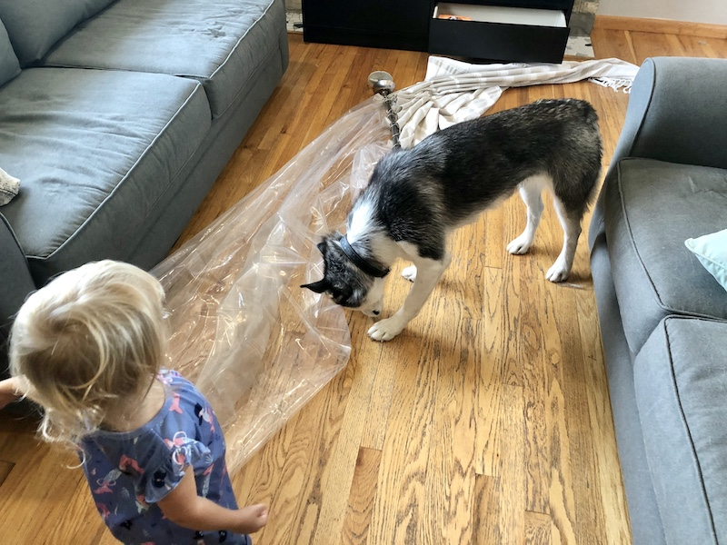 Husky pulled shower curtain down