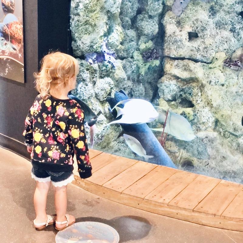 Jeanette's Pier aquarium