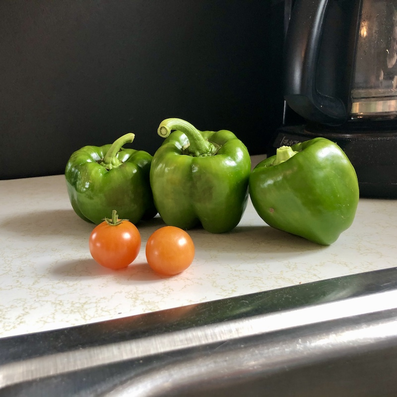 Green peppers and tomatoes from vegetable garden in Pittsburgh, PA