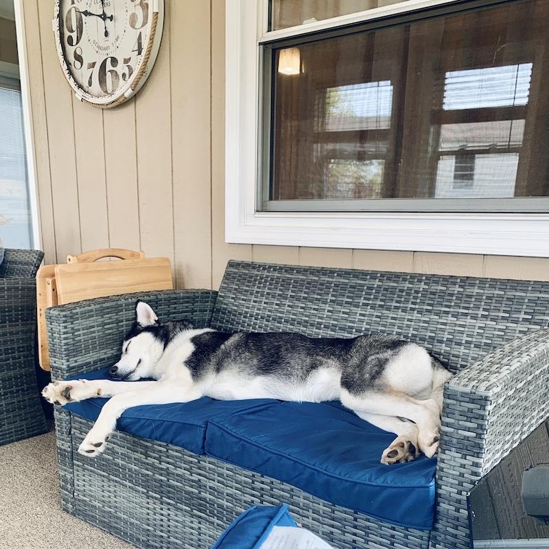 Husky sleeping on couch