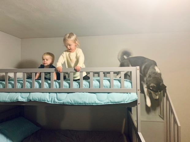Husky on bunk bed with toddlers