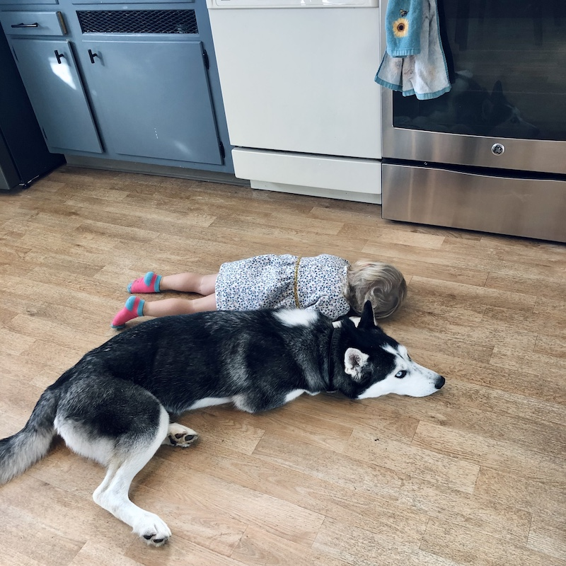 Husky laying with child