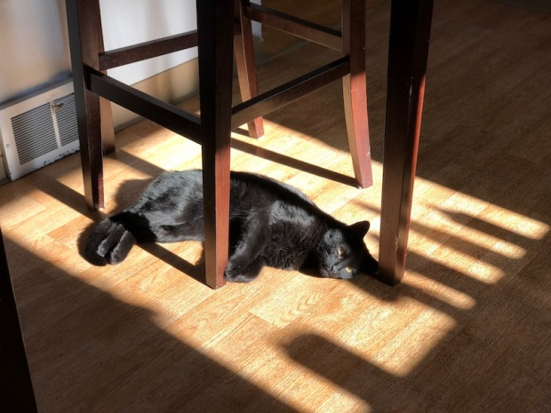 Black cat laying in sun