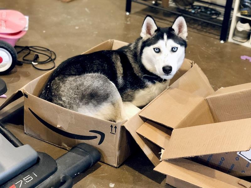 Siberian Husky sitting in Amazon box