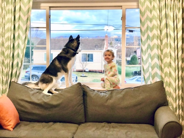 Toddler sitting in window with husky
