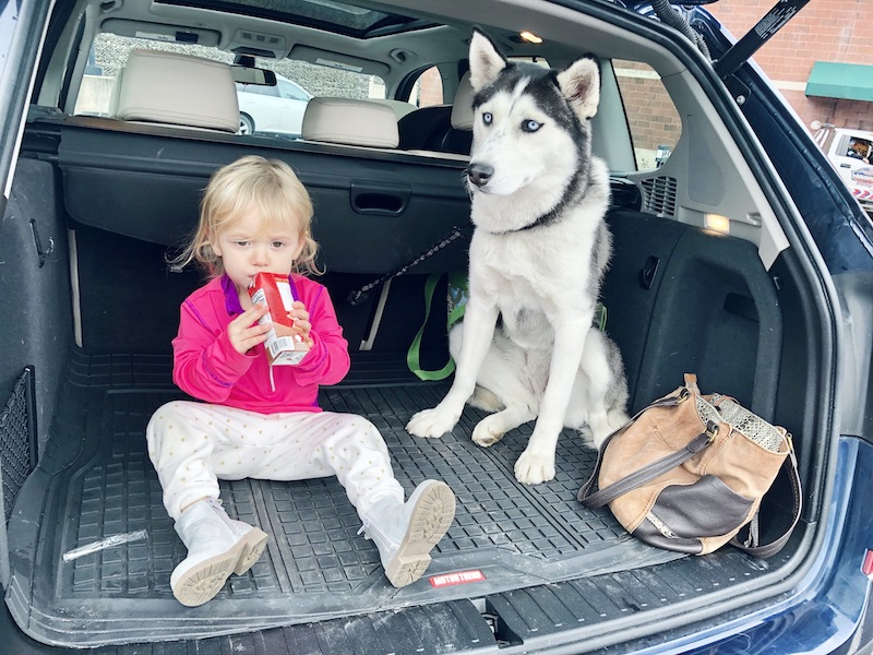Husky and toddler sitting in car together