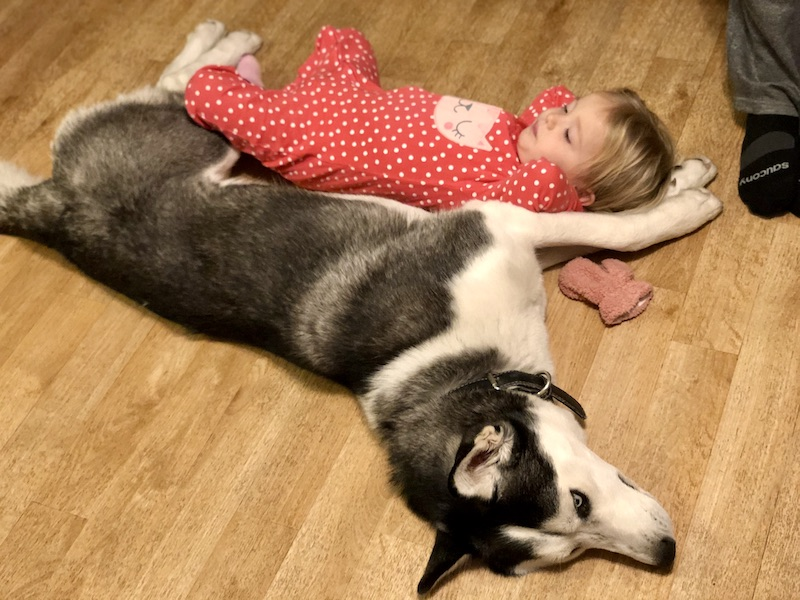 Baby and husky laying together
