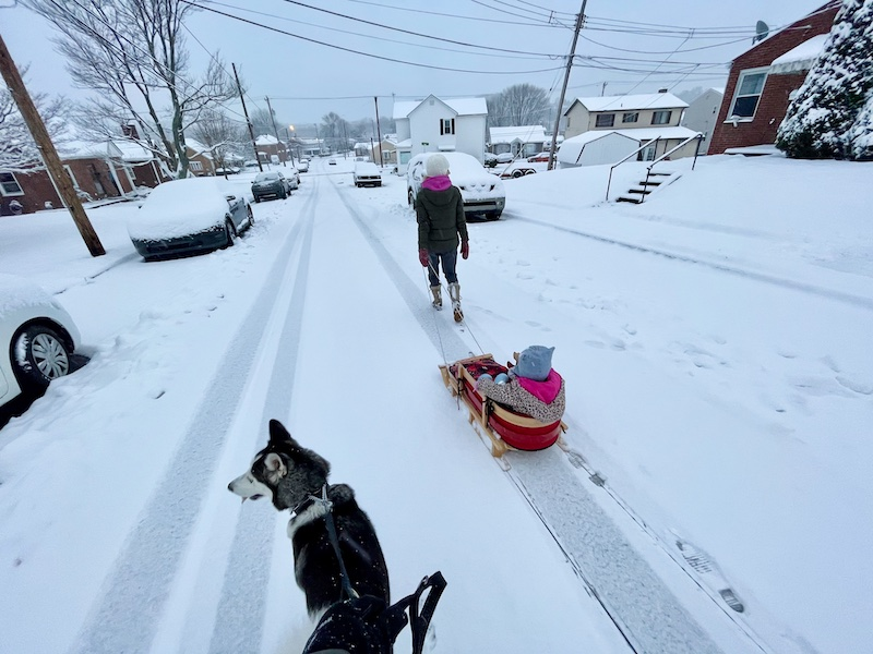 Girl pulling child in sled with husky