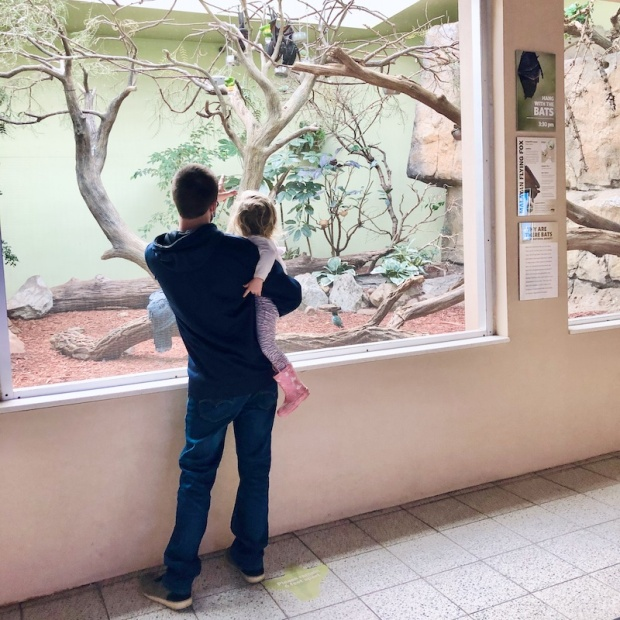Dad holding toddler at the National Aviary in Pittsburgh