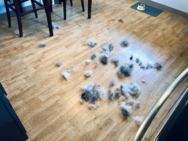 Husky fur after brushing