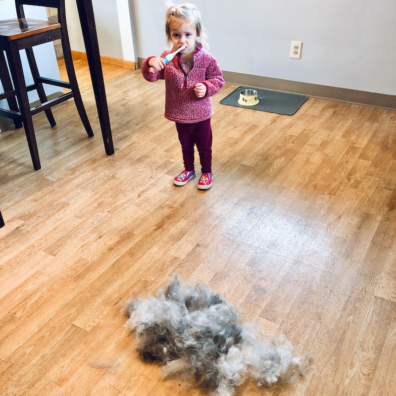 Husky fur all over floor from shedding and blowing coat