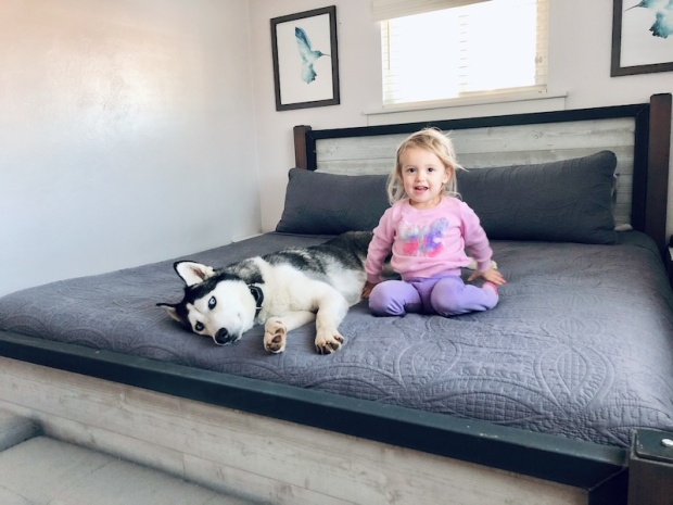 Husky and toddler on bed together
