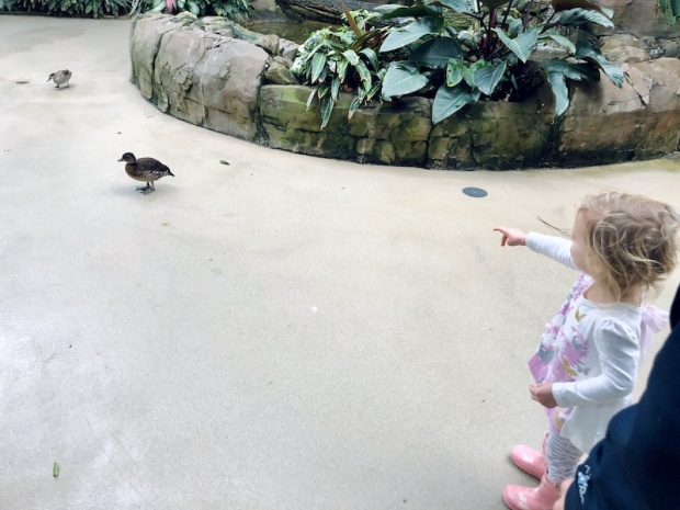 Toddler at the National Aviary in Pittsburgh, PA