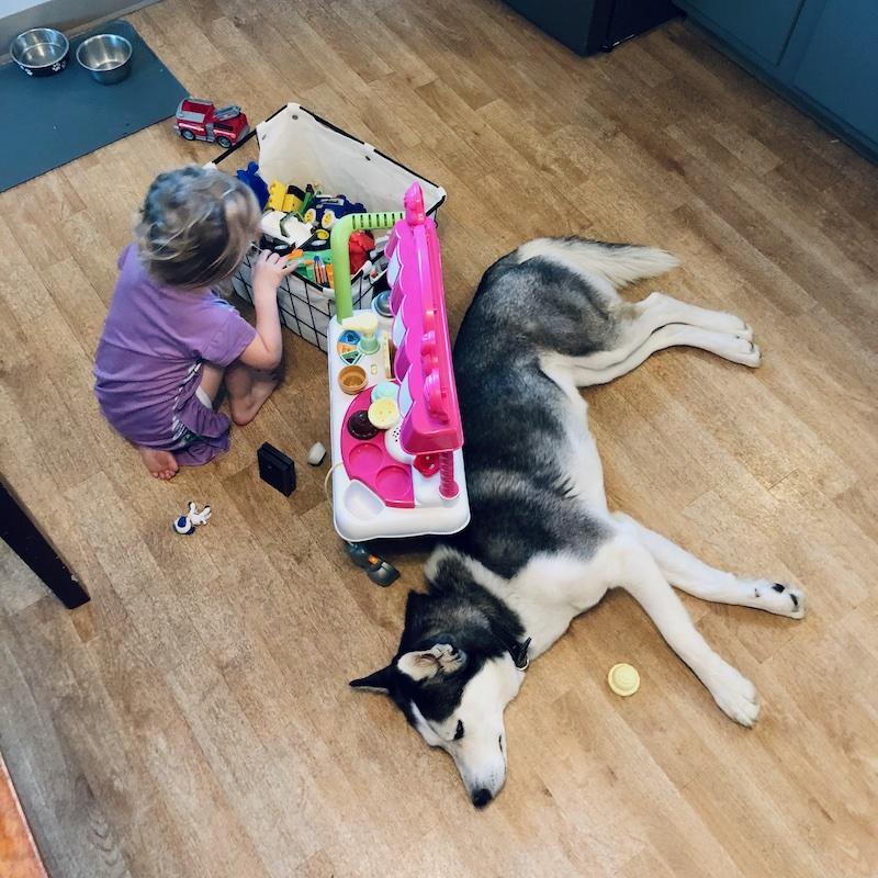 Toddler and husky playing together