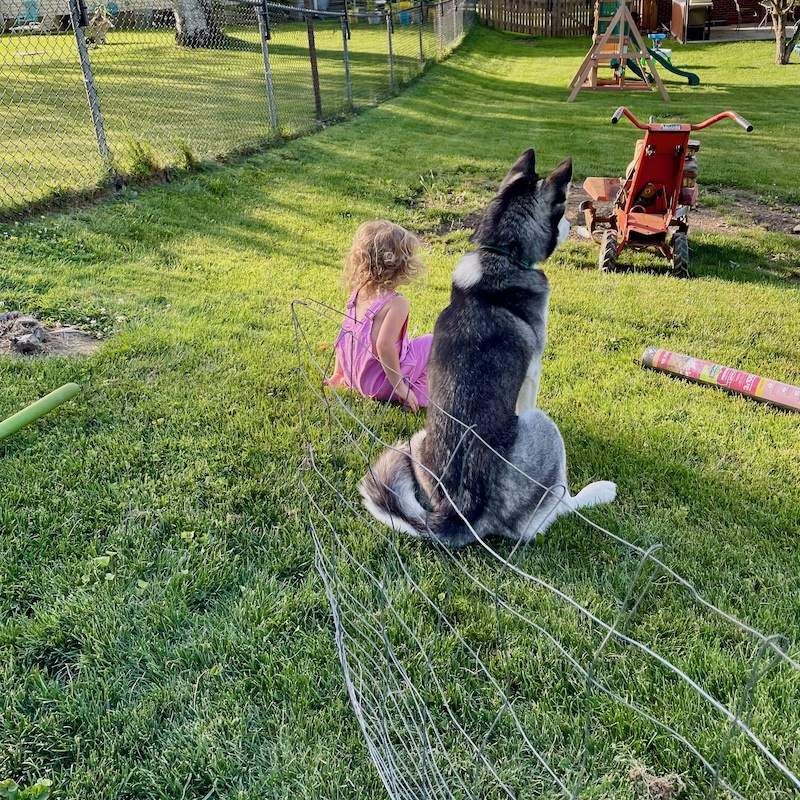 Toddler and husky sitting side by side in grass