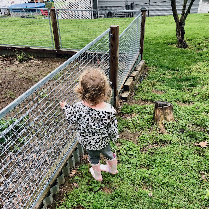Toddler girl in rain boots and rain jacket standing by fenced-in garden