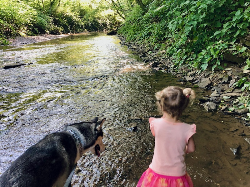 Toddler and husky standing in creek