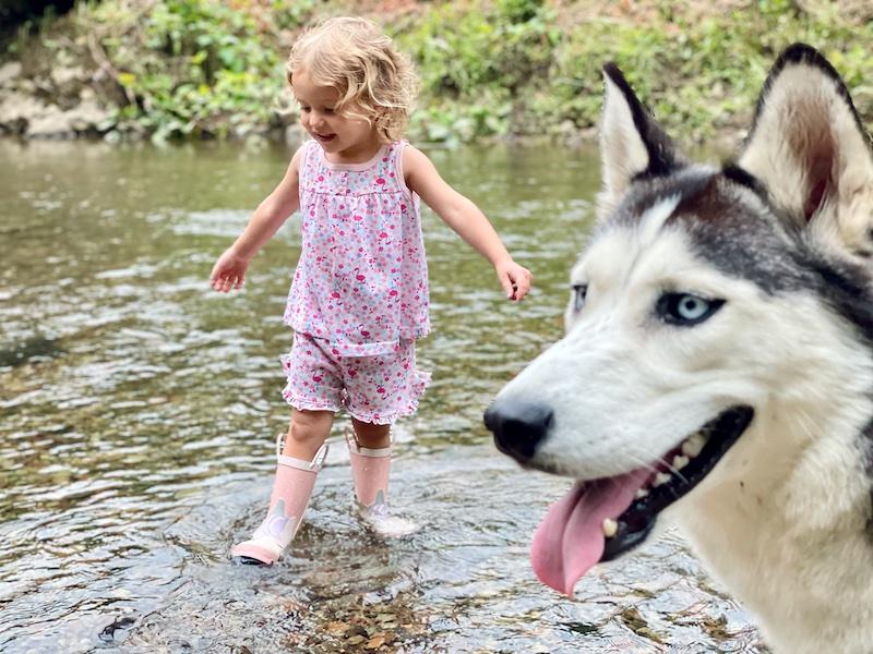 Toddler wearing rain boots in creek with Siberian husky
