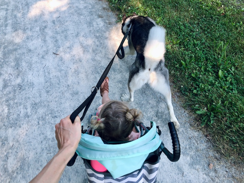 Toddler and husky on trail in Pittsburgh