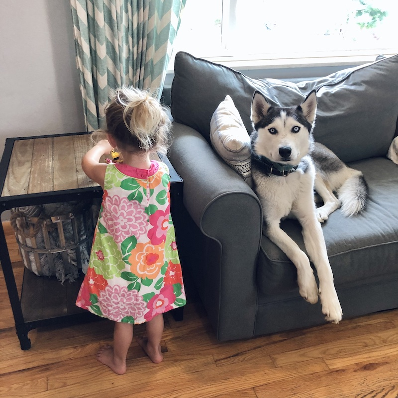 Toddler and husky together on couch