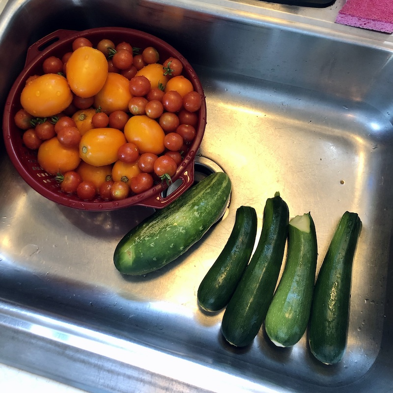 Zucchini, cucumbers, and tomatoes from vegetable garden