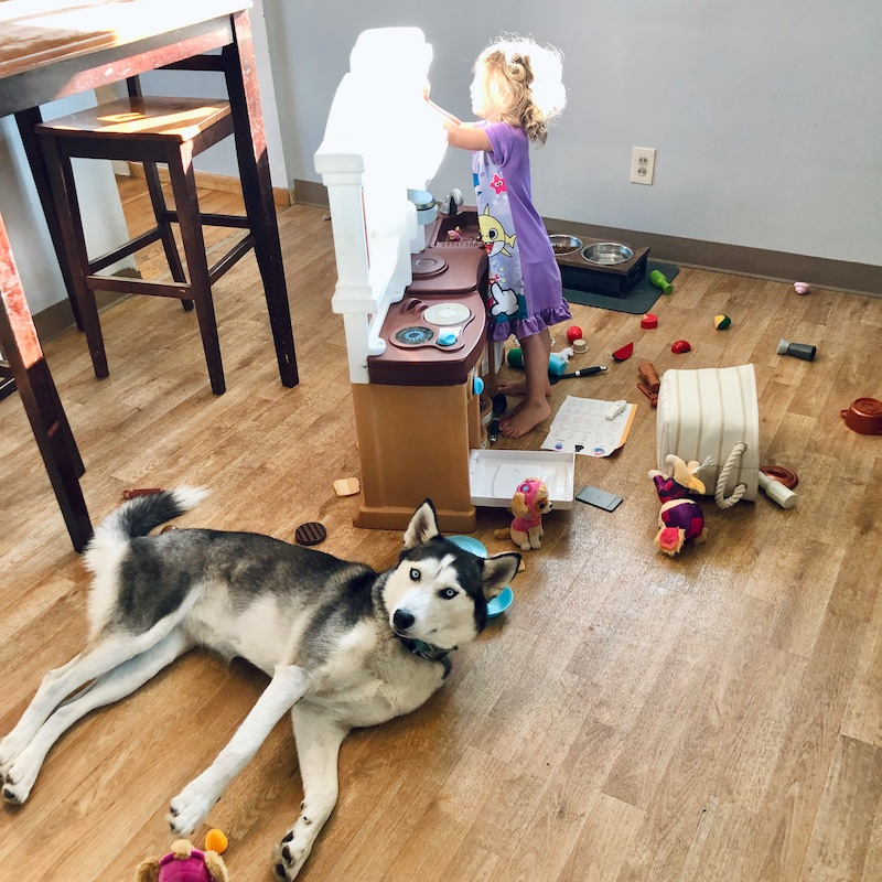 Toddler making a mess in kitchen with husky