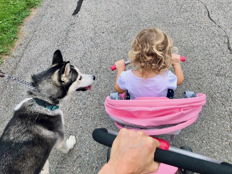 Toddler riding bike next to husky