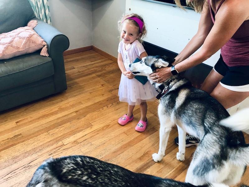 Toddler girl standing with husky