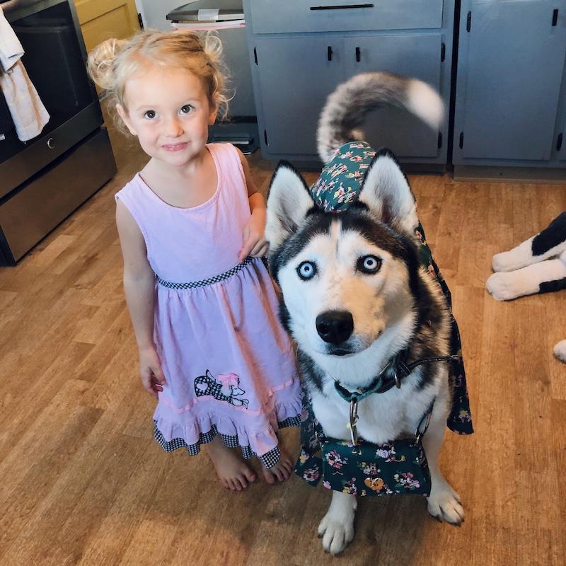 Toddler standing next to husky